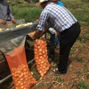 Horticulture Innovations for Onion farmers